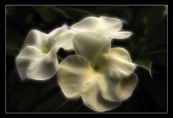 Blooms Digital Art - Purity by Ricky Barnard