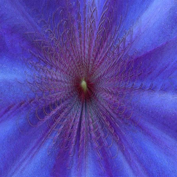Wall Art - Mixed Media - Purple And Blue  by Jack Zulli