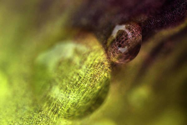 Wall Art - Photograph - Purple And Green Morning Dew by Iris Richardson