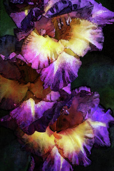 Photograph - Purple And Yellow Glads Digital Painting 3036 Dp_2 by Steven Ward