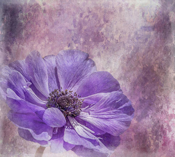 Photograph - Purple Anemone Art by Teresa Wilson