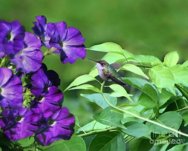 Photograph - Purple Attraction by Barbara S Nickerson