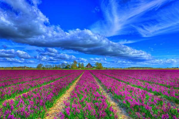 Wall Art - Photograph - Purple Awakening by Midori Chan