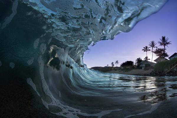 Wall Art - Photograph - Purple Beach Eater by Sean Davey