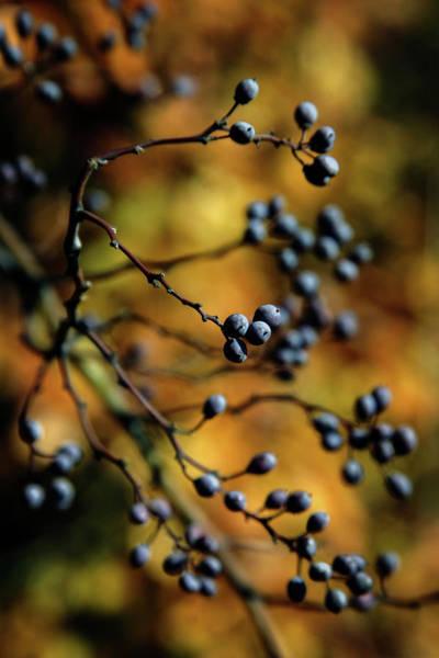 Photograph - Purple Berries 7190 H_2 by Steven Ward