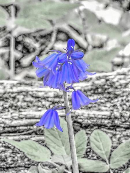 Digital Art - Purple Bluebell Wildflower by Rusty R Smith