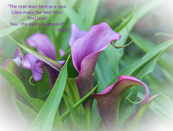 Wall Art - Photograph - Purple Calla Lilies 2 by Linda Eszenyi