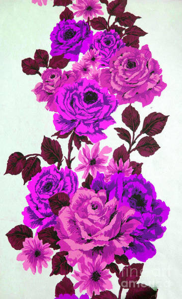 Photograph - Purple Climbing Roses by Brenda Kean