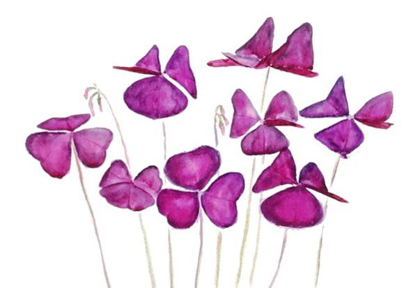 Lucky Clover Painting - Purple Clover Leaves by Color Color