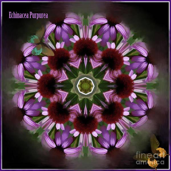Digital Art - Purple Coneflower Kaleidoscope by Kathryn Strick