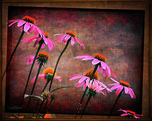 Wall Art - Digital Art - Purple Coneflowers Out Of Alignment  by Carol Fox Henrichs