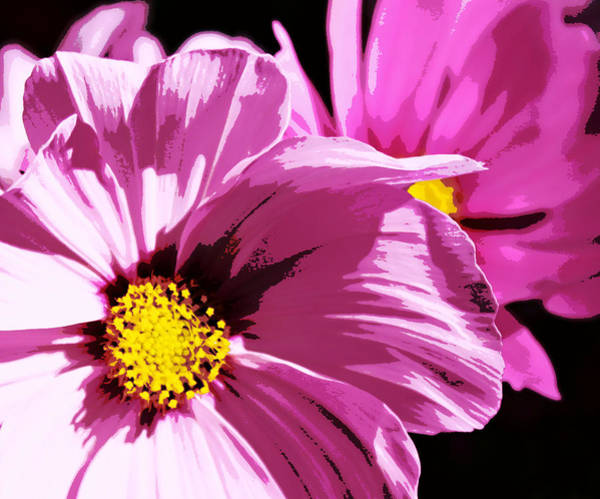 Posterize Photograph - Purple Cosmos by Cathie Tyler