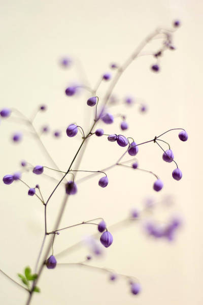 Photograph - Purple Droplets by Heather Applegate