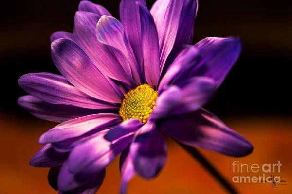 Wall Art - Photograph - Purple Elegance by Mechala Matthews