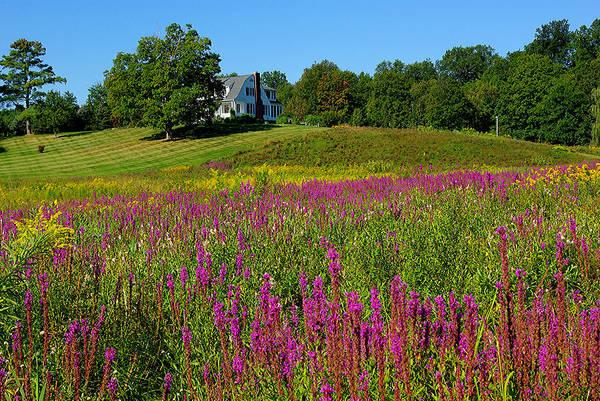 Wall Art - Photograph - Purple Field In New York State by Zal Latzkovich