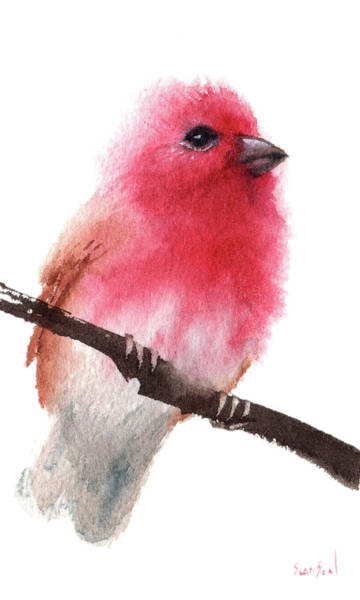 Painting - Purple Finch by Sean Seal