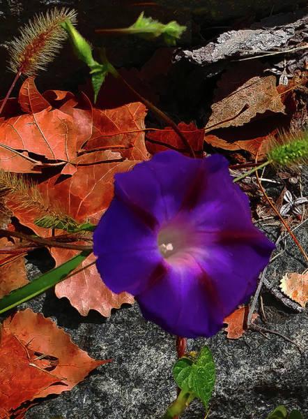 Purple Flower Autumn Leaves Art Print