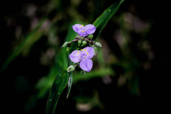 Photograph - Purple Flower by Chris Coffee
