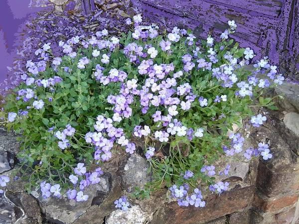Photograph - Purple Flower Textured Photo 1028b by Julia Woodman