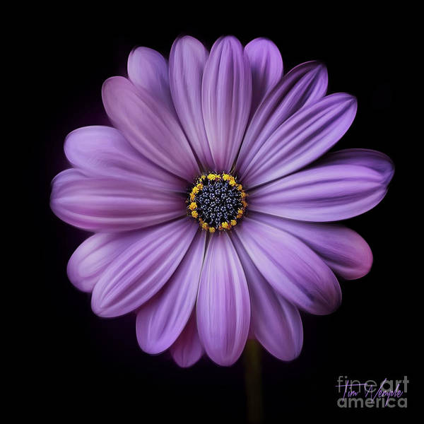 Photograph - Purple Flower by Tim Wemple