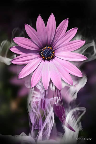 Purple Flower With Smoke Art Print