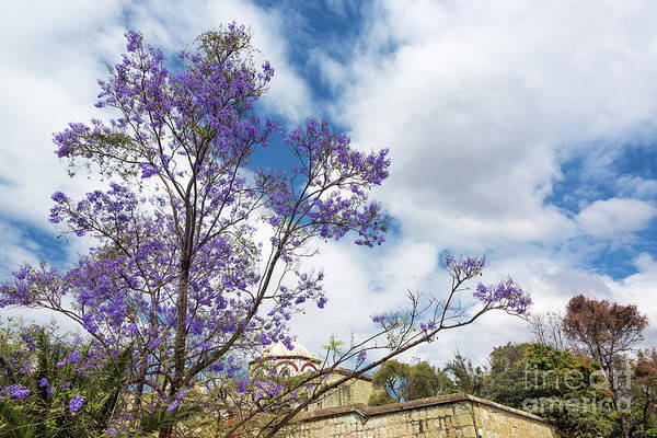 Wall Art - Photograph - Purple Flowers And Sky by Jess Kraft