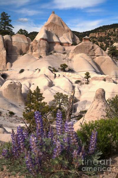 Photograph - Purple Flowers At Tent Rock Canyon by Adam Jewell