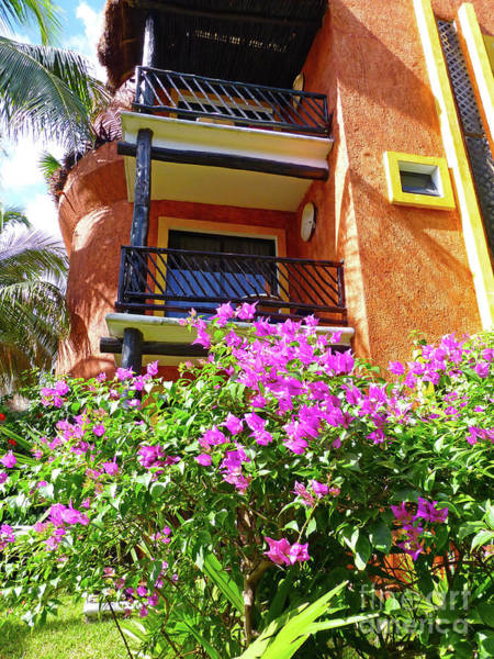 Photograph - Purple Flowers By The Balcony by Francesca Mackenney
