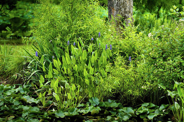 Photograph - Purple Flowers By The Ponds Edge by Dennis Dame