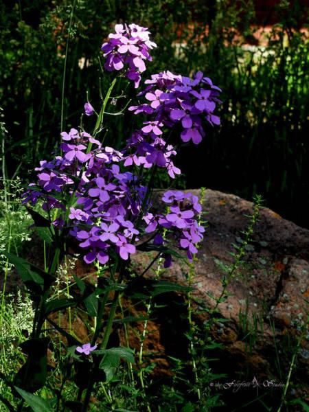Photograph - Purple Flowers by Jill Westbrook
