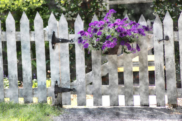 Photograph - Purple Flowers On Gate by Donna Bentley