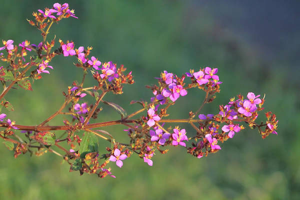 Photograph - Purple Flowers by Pamela Walton