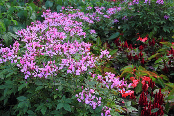 Photograph - Purple Garden by Angela Murdock