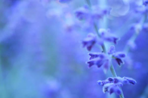Photograph - Purple Garden by Douglas MooreZart
