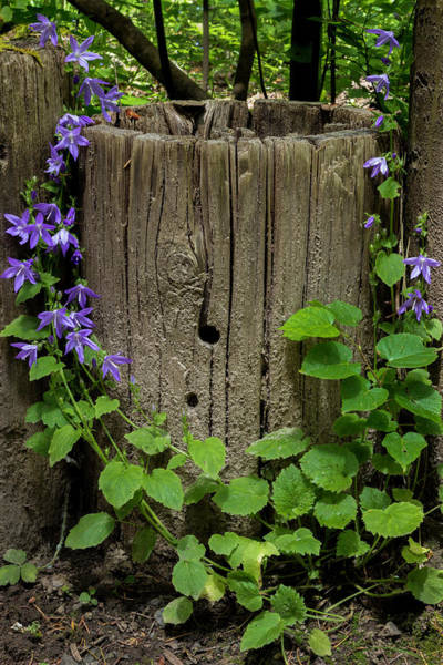 Photograph - Purple Garland by Hans Franchesco