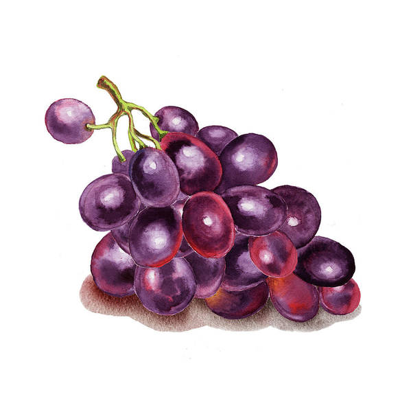 Painting - Purple Grape Watercolor  by Irina Sztukowski