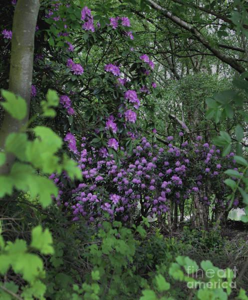 Photograph - Purple Haze by Doc Braham
