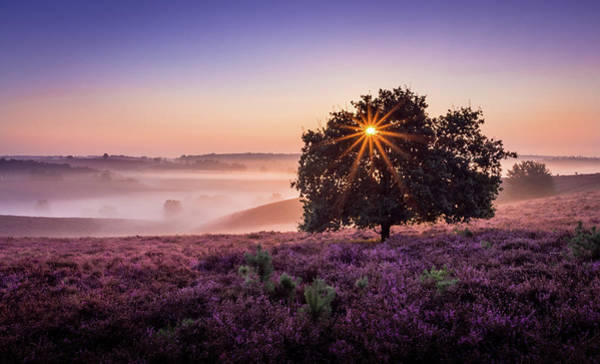 Photograph - Purple Haze by Mario Visser