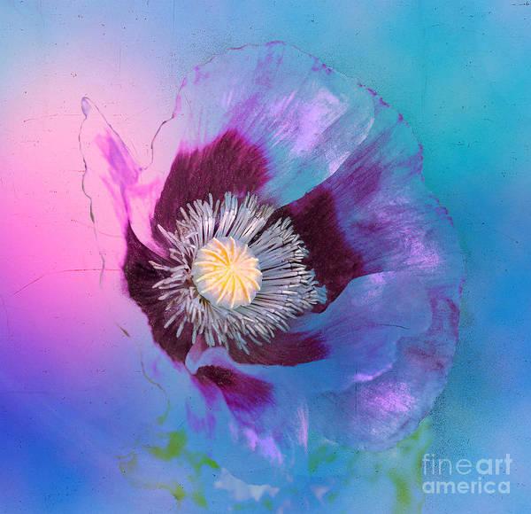 Purple Haze Digital Art - Purple Haze by Nick Eagles