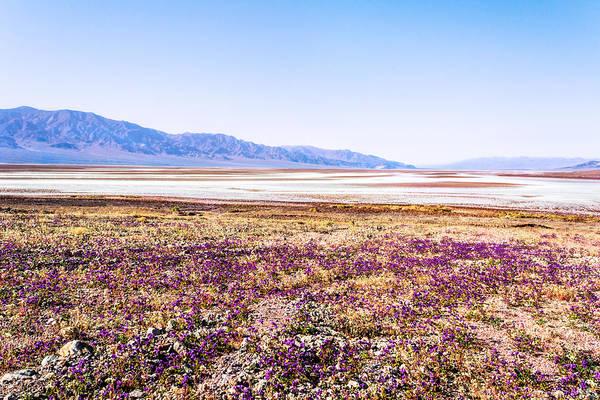 Photograph - Purple Hazy by Rick Wicker