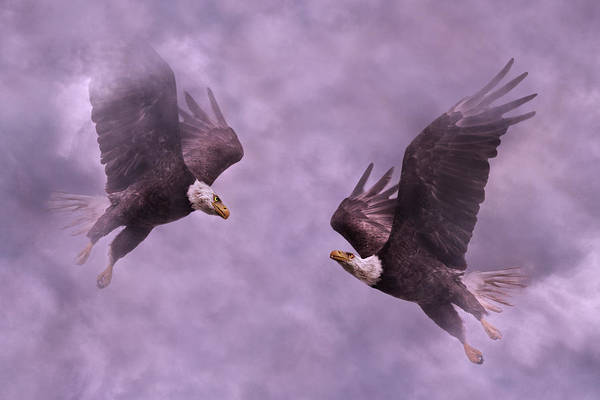 Flying Eagle Photograph - Purple Hearts by Betsy Knapp