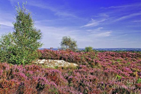 Photograph - Purple Heather Landscape by Martyn Arnold