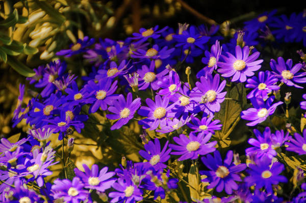 Photograph - Purple In The Garden by Bill Cannon