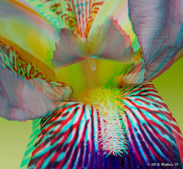 Anaglyph Photograph - Purple Iris - Use Red-cyan 3d Glasses by Brian Wallace