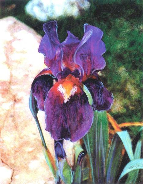 Mixed Media - Purple Iris by Banning Lary