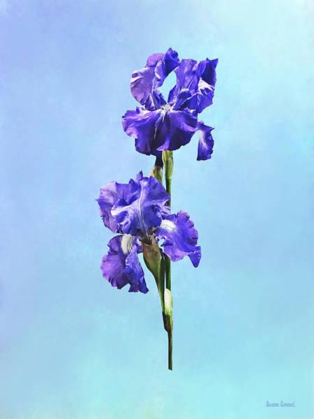 Photograph - Purple Iris Pair by Susan Savad