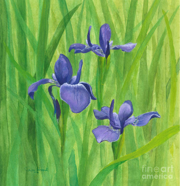 Painting - Purple Iris by Phyllis Howard