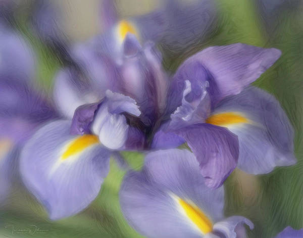 Photograph - Purple Iris Remix by Teresa Wilson