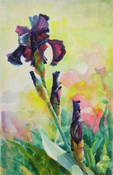 Romantic Flower Wall Art - Painting - Purple Iris by Steve Henderson