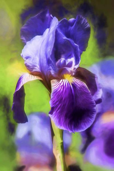 Photograph - Purple Iris by Teresa Wilson